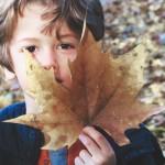 // Portraits de famille et feuilles d'automne